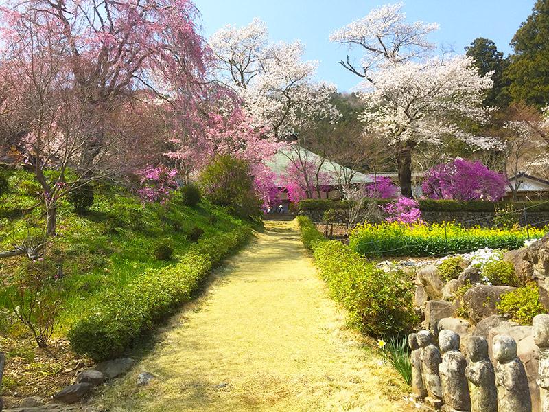 花見の穴場発見!秋川渓谷 龍珠院(乙津花の里)の桜がすごかった