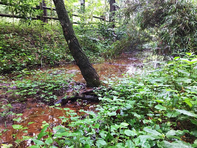 ジャングルのような川