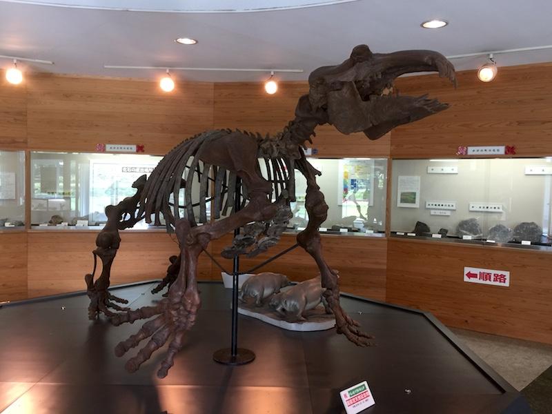 おがの化石館のパレオパラドキシア