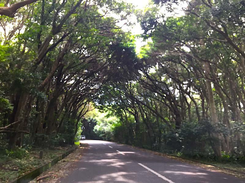 潮岬の木のトンネル