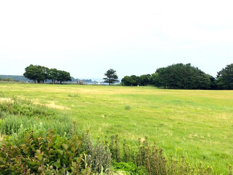 潮岬の望楼の芝